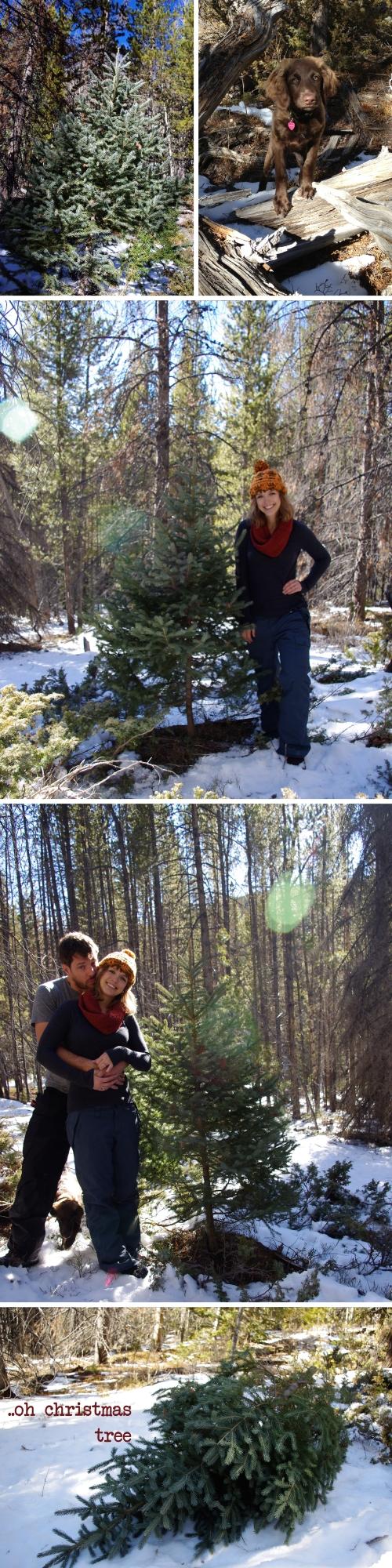 Colorado Christmas Tree