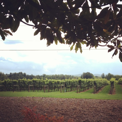 burntshirt vineyard